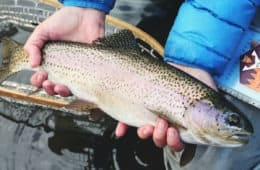 How to Fly Fish for Trout in a Lake
