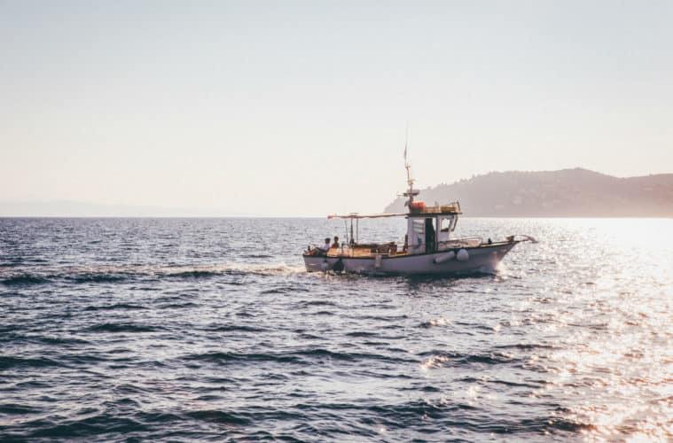 Best Saltwater Fish to Catch