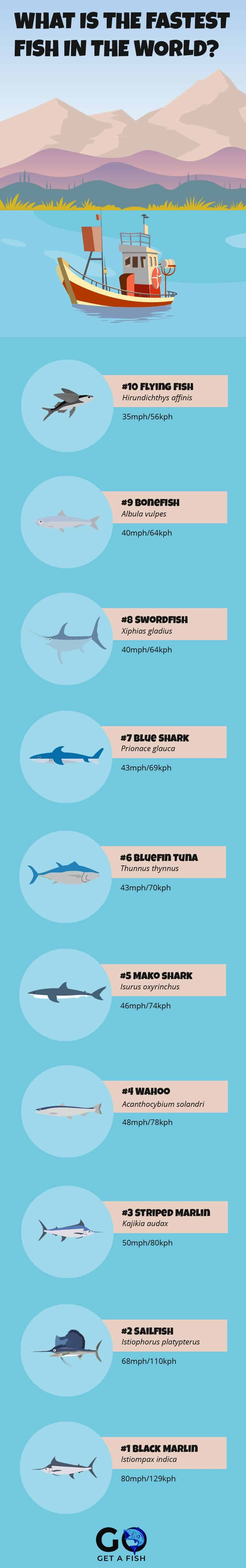10 Fastest Fish In The World Go Get A Fish