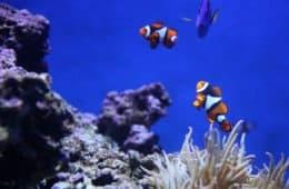 Reasons Why Fish Can Die in Aquarium Tanks