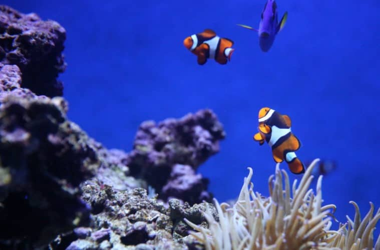 Reasons Why Fish Can Die in Aquarium Tanks