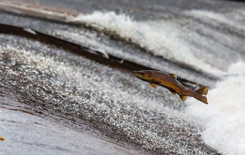 salmon fishing aberdeen